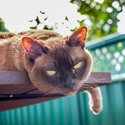 Environmental Enrichment for Your Cat