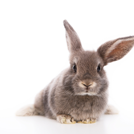 Rabbit Health and Care