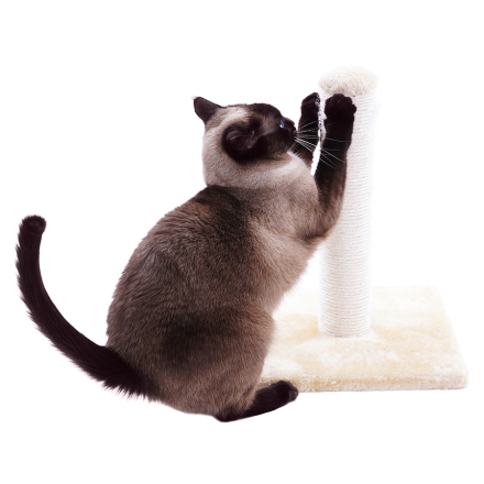 How to prevent cats from scratching in undesirable areas