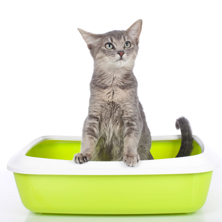 Litter Box Care: How to Prevent or Treat Elimination Problems
