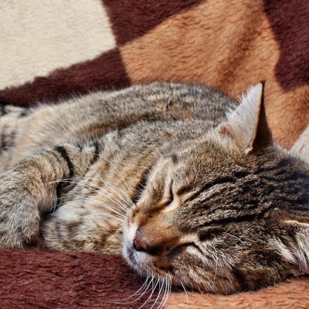 Feline Chronic Kidney Disease (CKD)