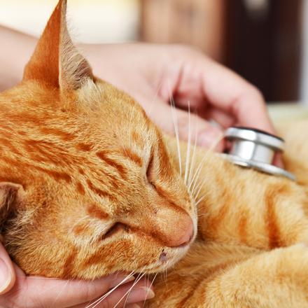 Cat Flu – Feline Respiratory Disease