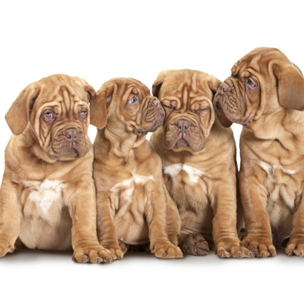 Puppy Care Schedule