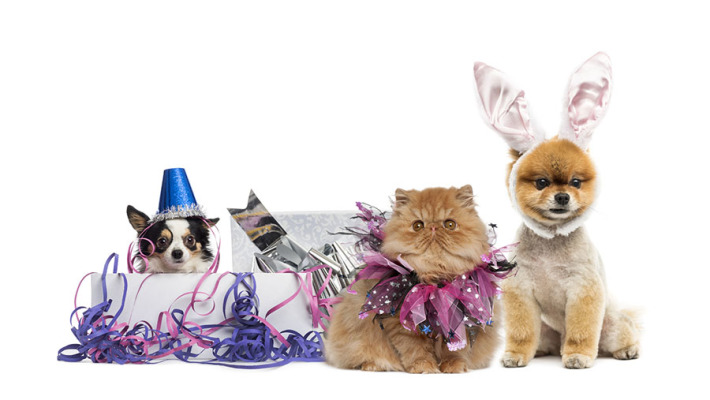 Festive Do's and Don'ts for your Pets