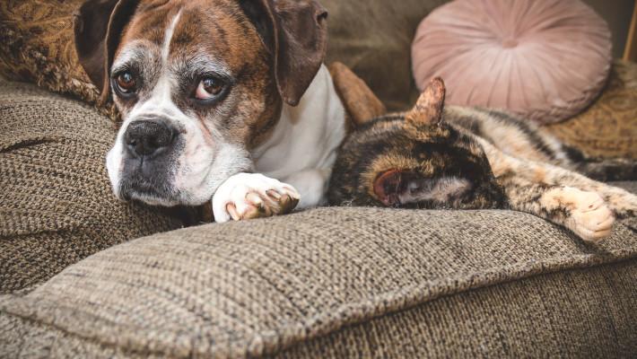Senior Pet Wellness Focus 2016