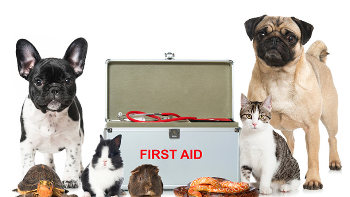 First Aid for your Pet