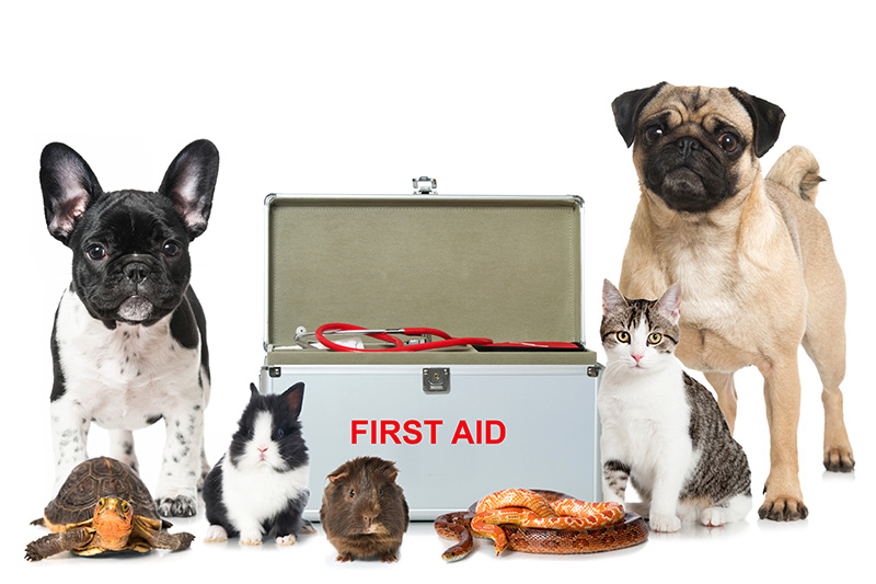 Canine Friendly Pet First Aid Kit | Waggle.com.au |First Aid For Pets Files