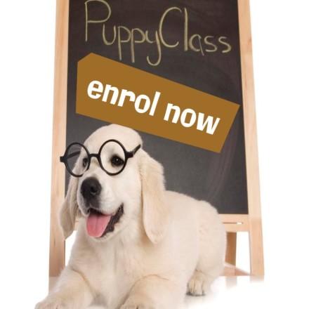 Puppy Pre-School