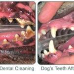 Dental Focus 2018
